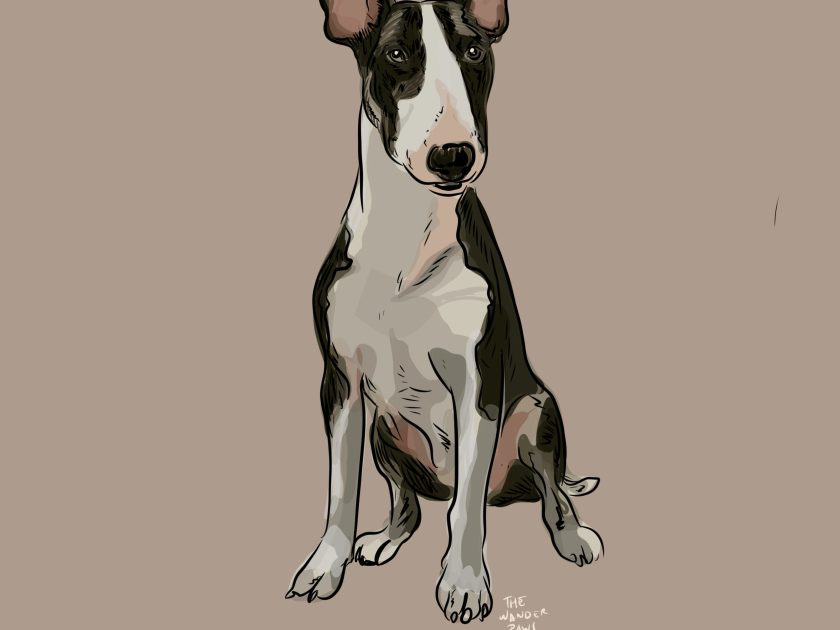 bull terrier drawing