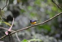 Noisy little bird