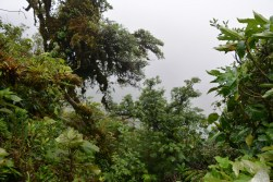 Very cloudy forest