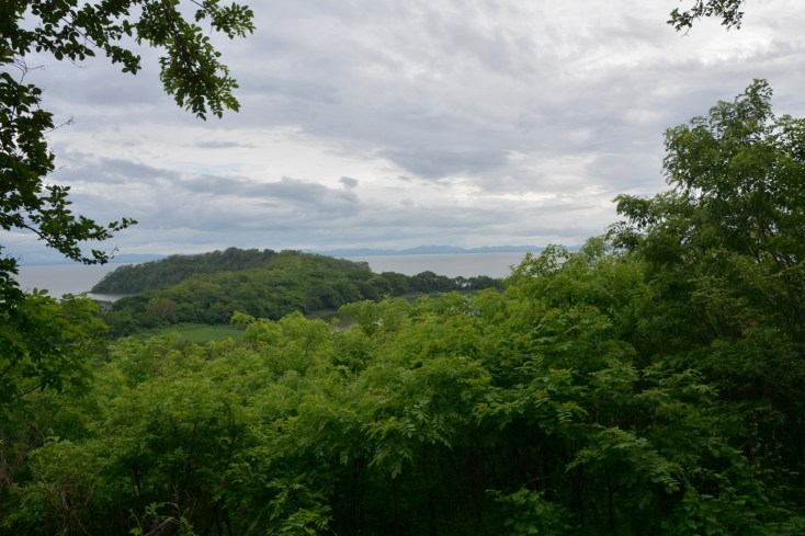 View from the forest trail