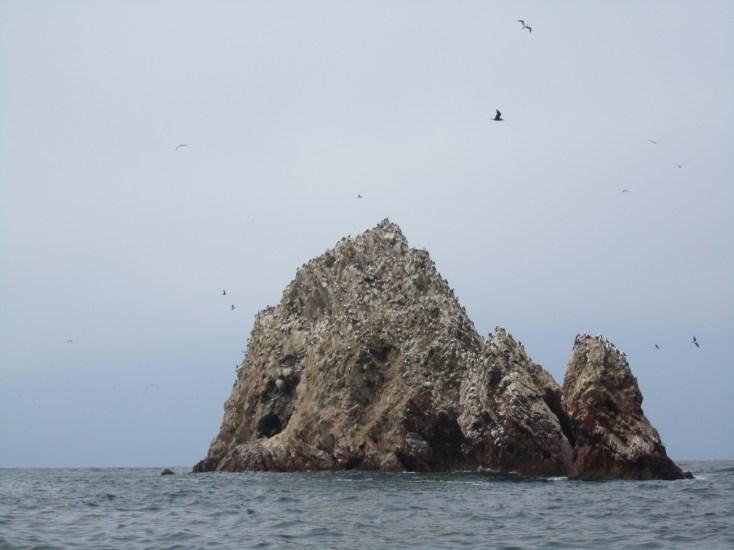 Islands of poo