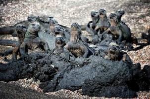 The Galapagos Islands, Ecuador