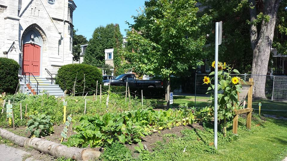 The Community Garden at The Spire