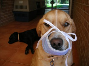 During my chemo in 2007/08 I wore mouth masks to protect me against bugs and infections. Boris misunderstood that concept though....
