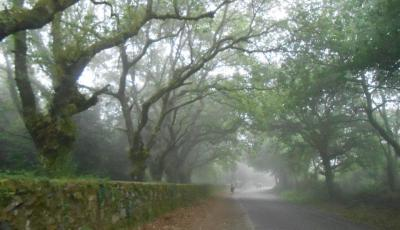 Walking through Fog on the Camino