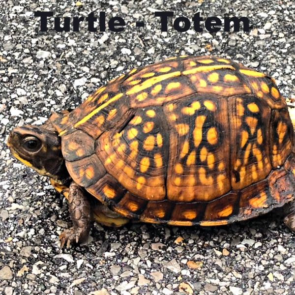 Turtle Totem Animal