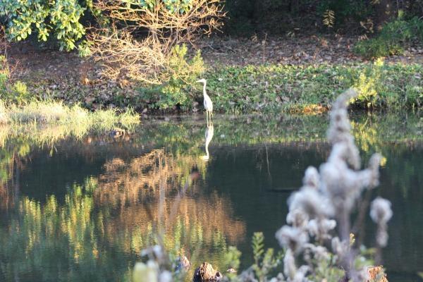 distantbird