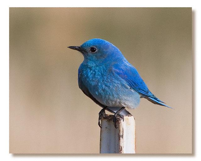 https://i1.wp.com/www.thespiritualun.org/bluebird.jpg