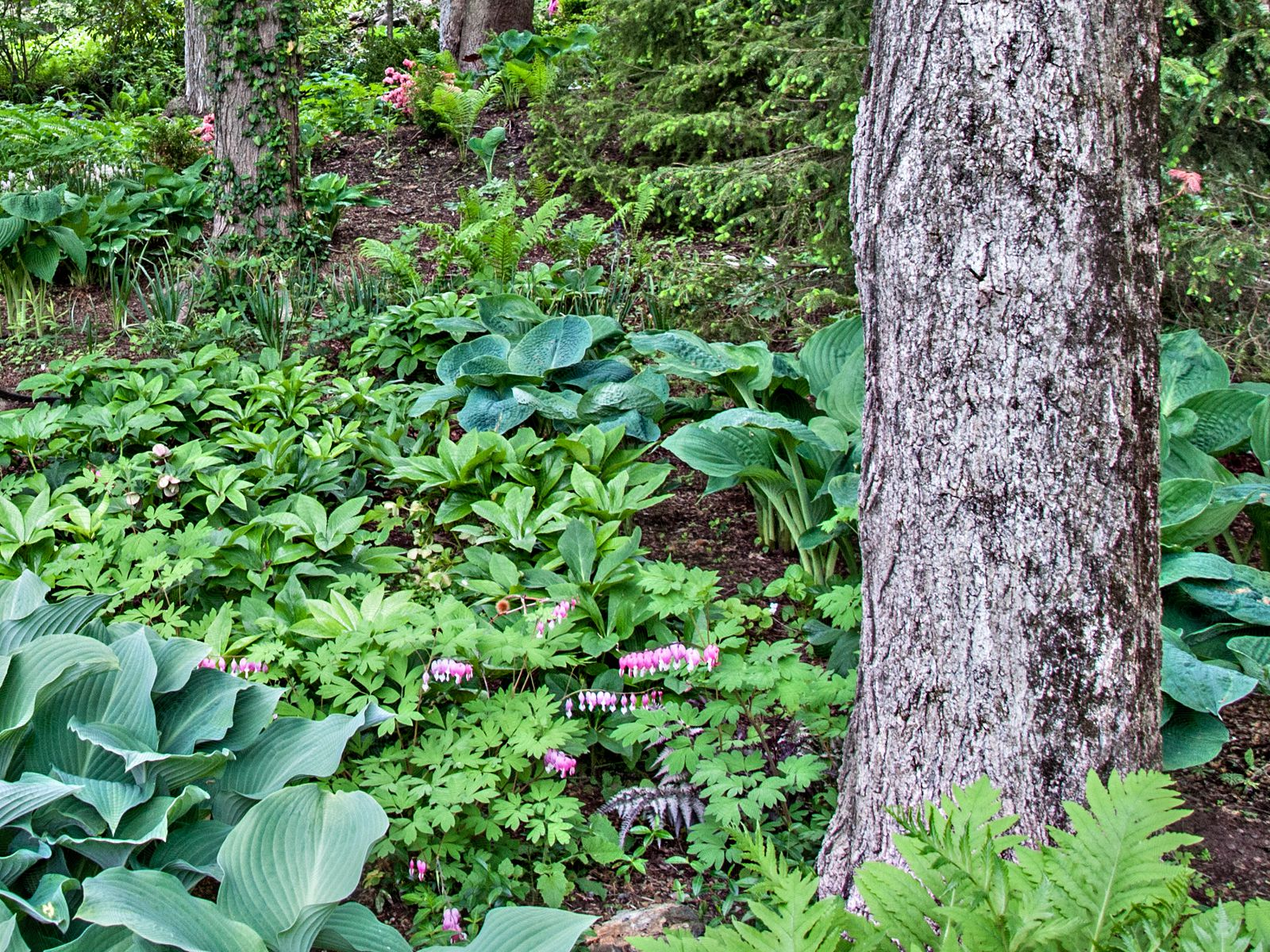 10 Tips for Planting Under Trees on Tree Planting Ideas For Backyard id=95604