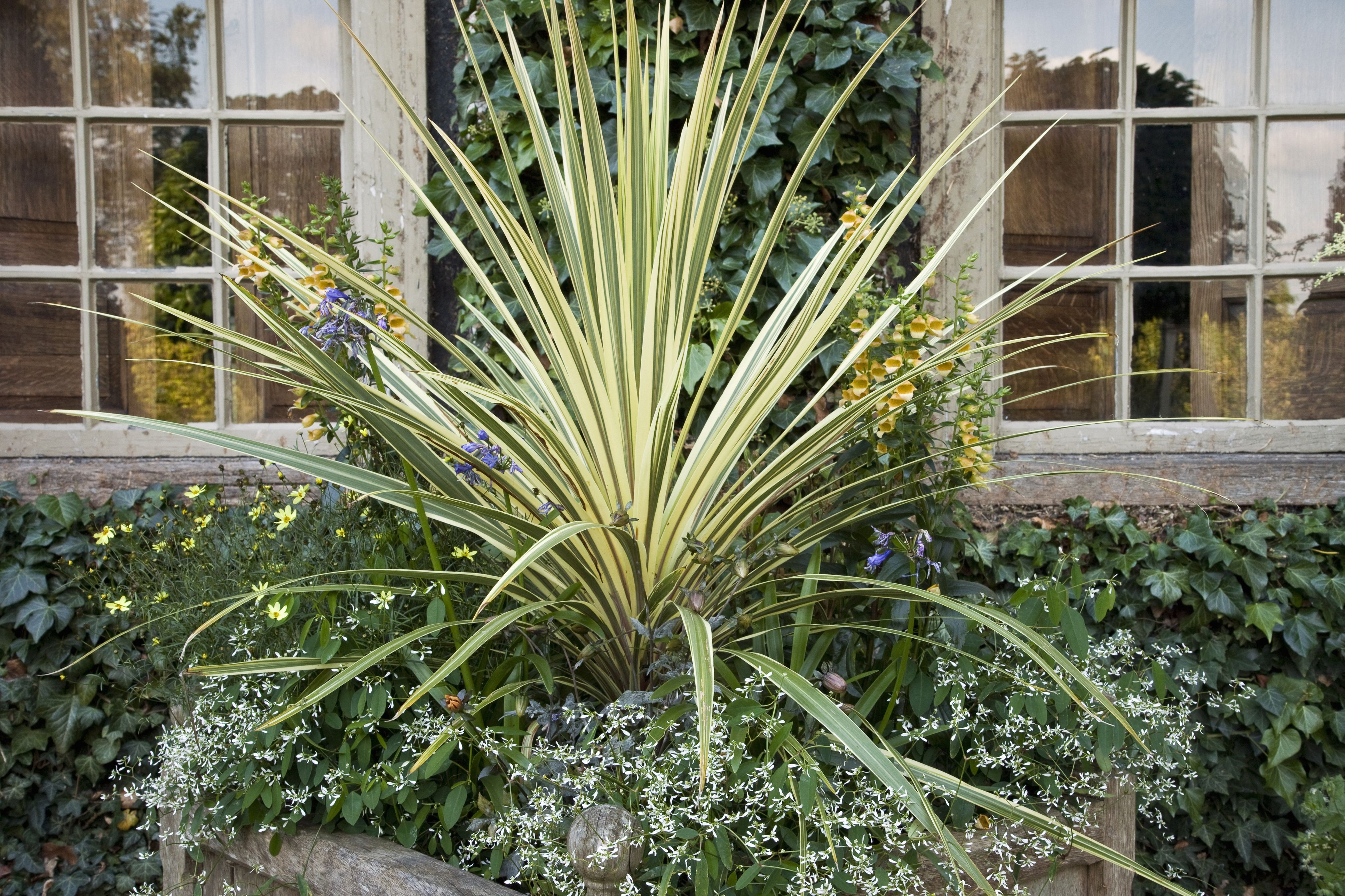 Growing New Zealand Flax Phormium