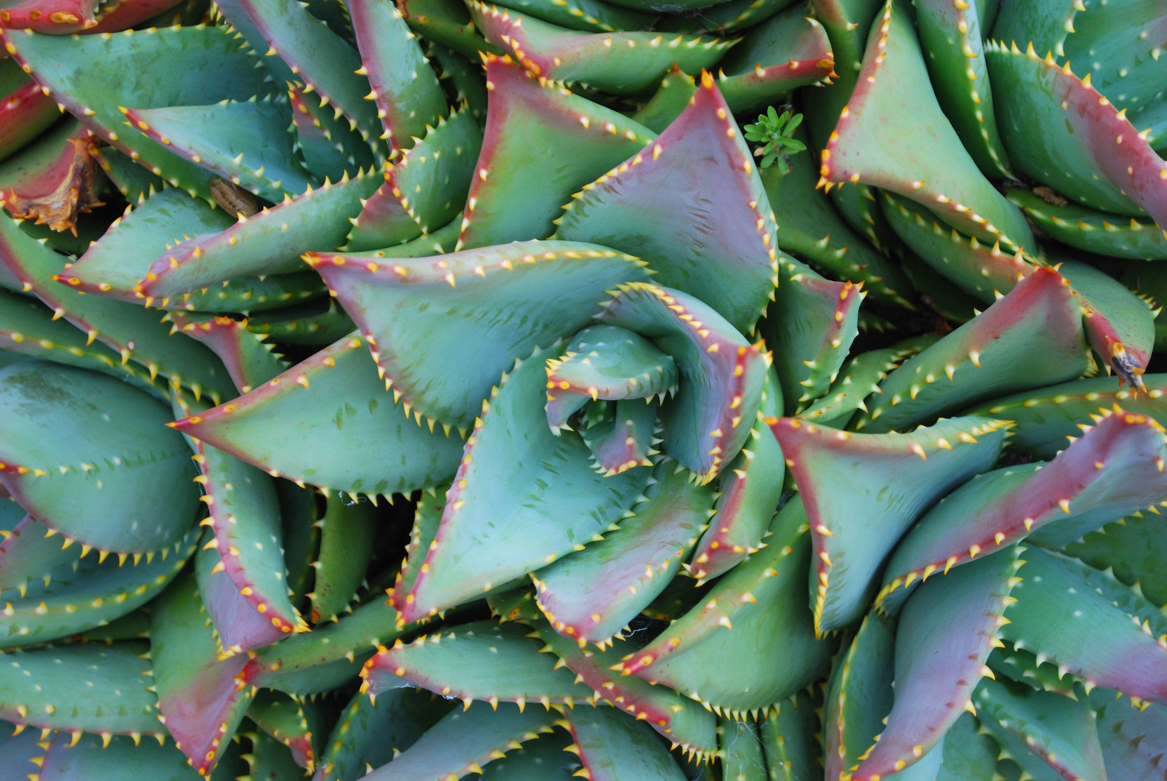 14 Types Of Aloe Plants