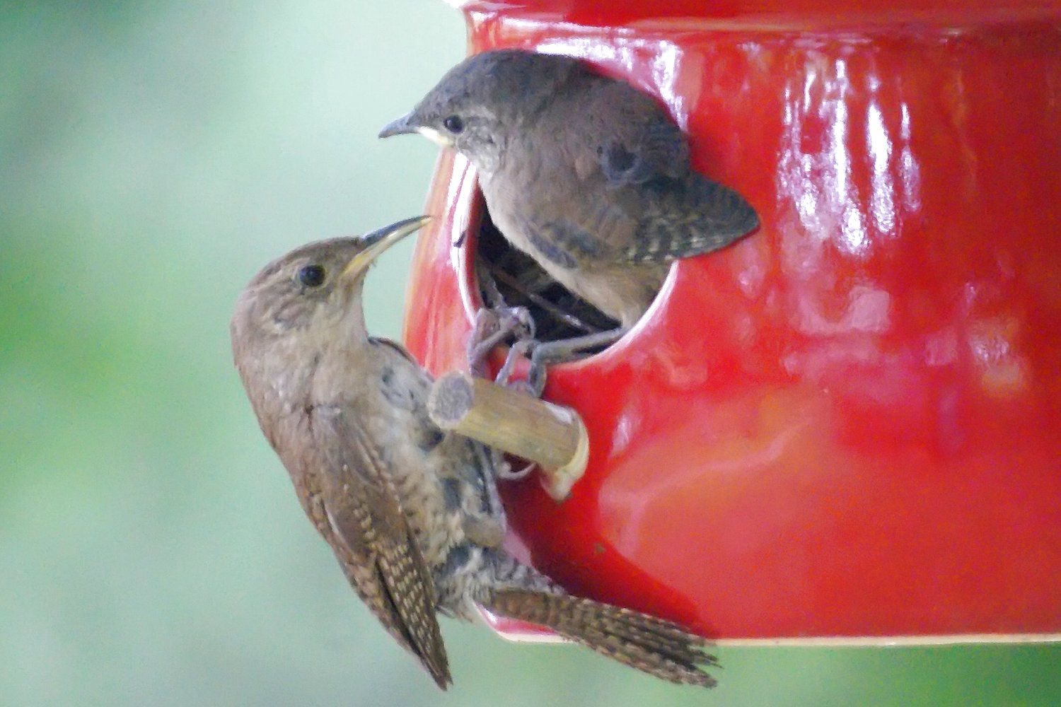 Birds That Use Birdhouses And How To Attract Them