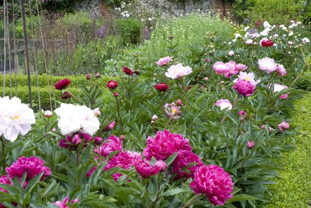 What Is A Perennial Flower Or Plant