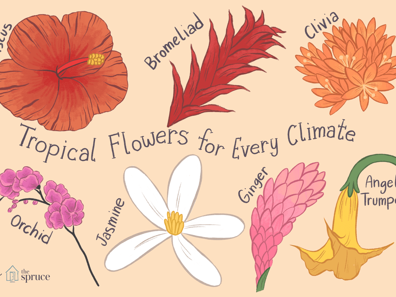 14 Types Of Tropical Flowers For Any Garden