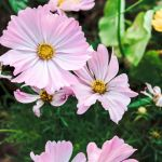 9 Best Flowers For The Vegetable Garden