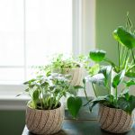 12 Best Houseplants For Sunny Windows