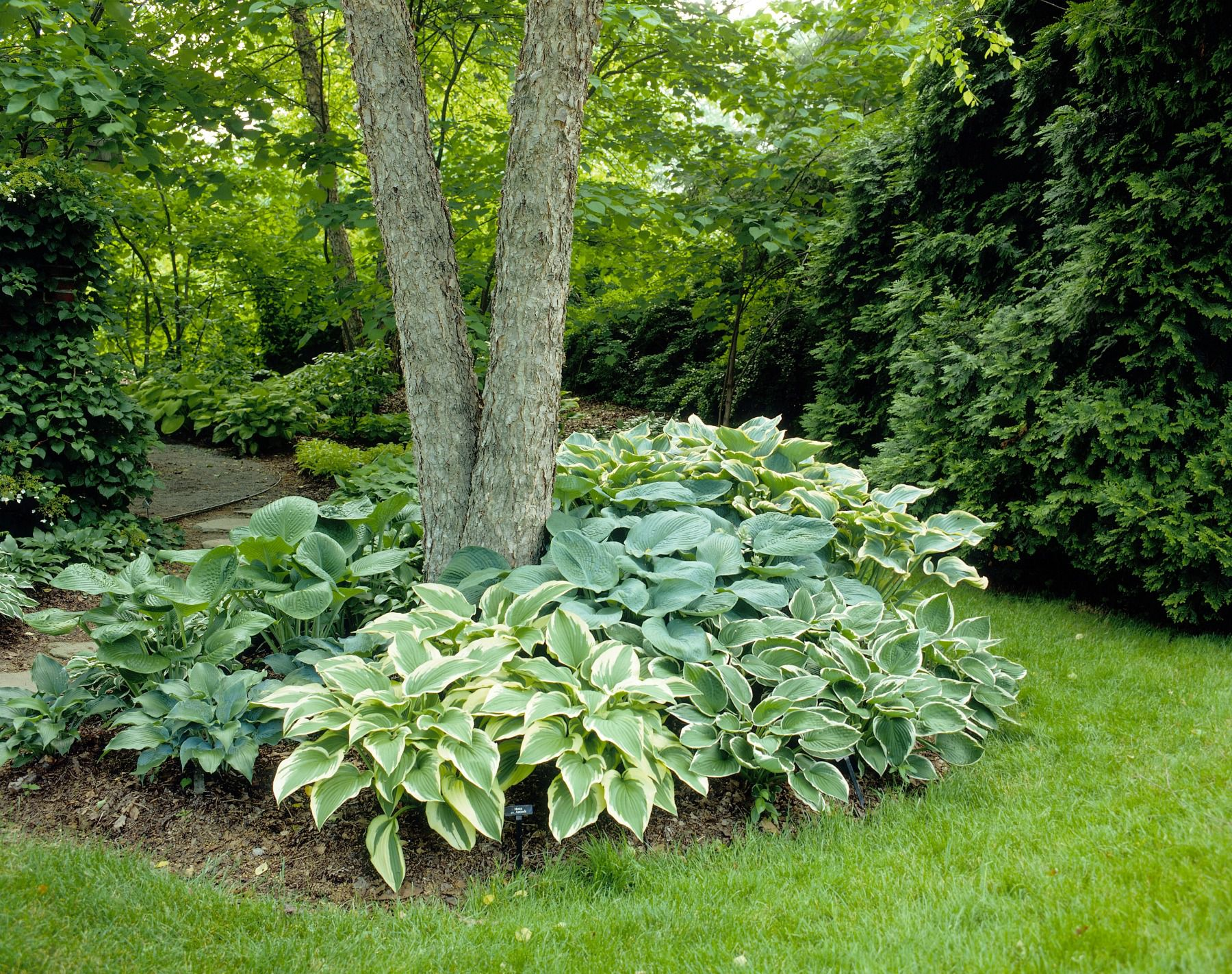 15 Ideas for Landscaping Around Trees on Backyard Landscaping Ideas With Trees id=24387