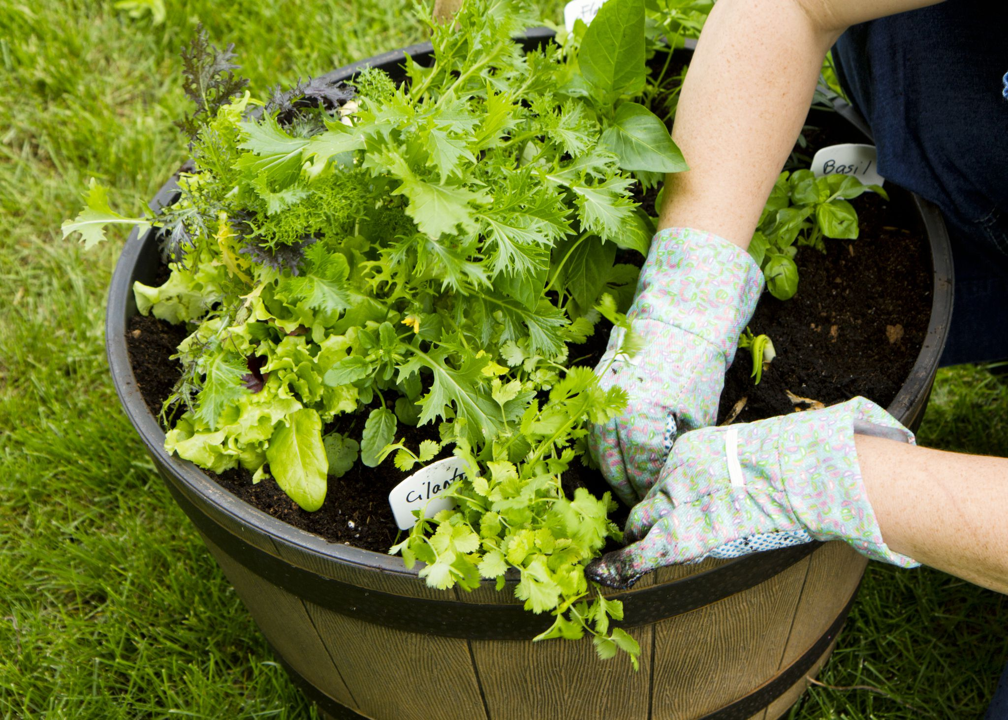 Vegetable Container Gardening: Getting Started on Gardening  id=15627