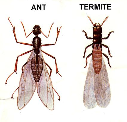 How To Get Rid Of Ants In The Bathroom Tiny Black Ants In Bathroom