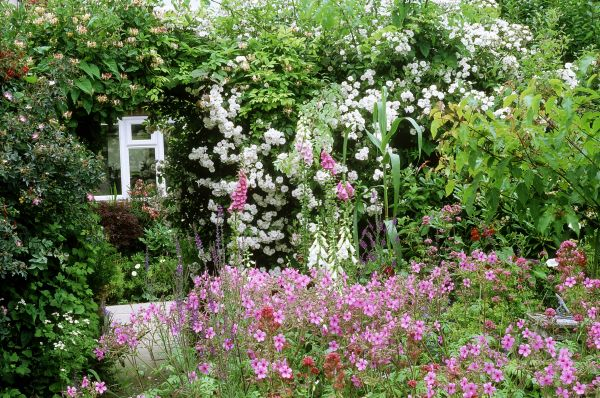 flowers for cottage style gardens Plants For a Traditional Cottage Garden