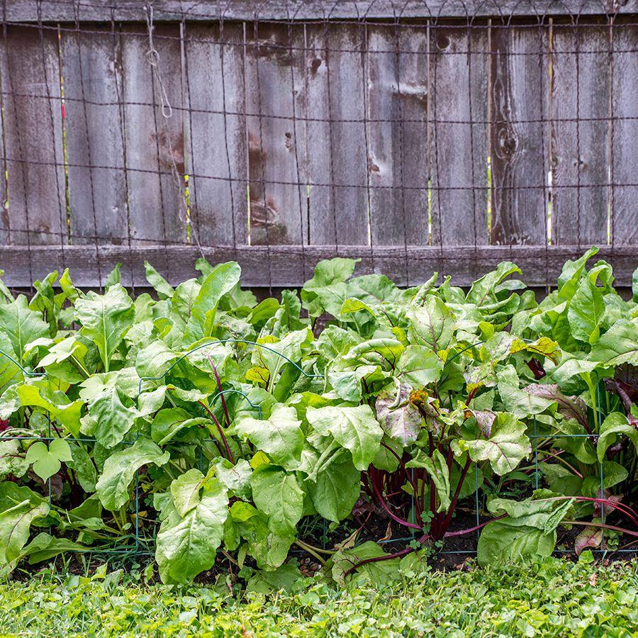 6 Best Vegetables For Early Spring
