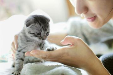 Supplies You'll Need for Your New Kitten