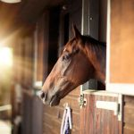 Horse Stable Design For Safety And Comfort