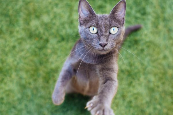 Understanding Cat Aggression or Hyperesthesia