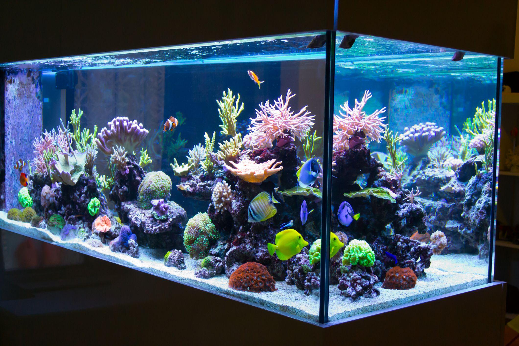 aquarium lighting basics the case for