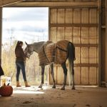 The Costs Of Caring For A Horse