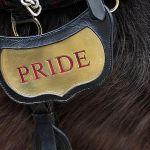 10 Fun And Useful Horse Name Generators