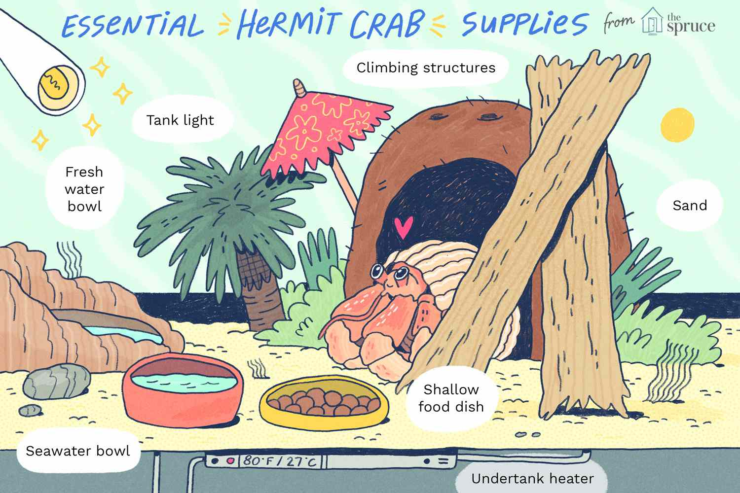sand tank for pet hermit crab