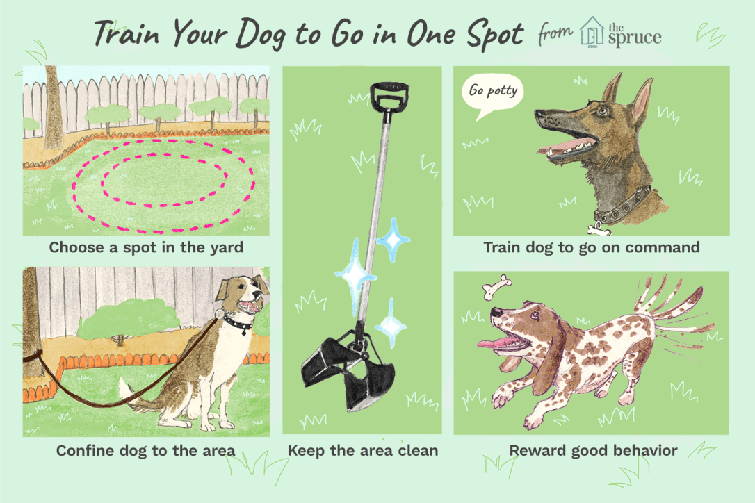 illustration of how to train you dog to go potty in one spot