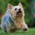 The Cutest Dog Breeds To Keep As Pets