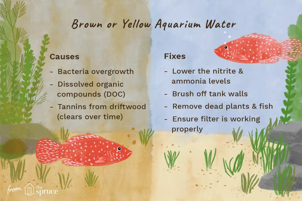 illustration of causes and fixes of brown or yellow aquarium water
