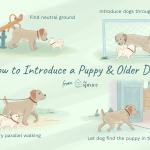 How To Train An Older Dog To Accept A New Puppy