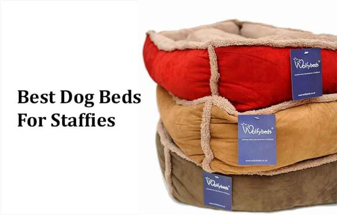 Dog beds for Staffies