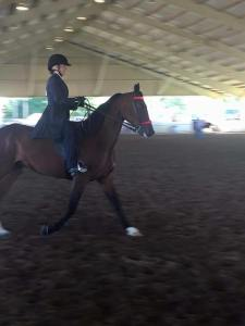 Bella Americana, a  6-year old pacing mare, being shown by Annah Parsons at the Ohio State Fair in the 4-H Easy Gaited Pleasure class.  She placed 5th out of 14 and was the only STB.        Photo from the Parsons'