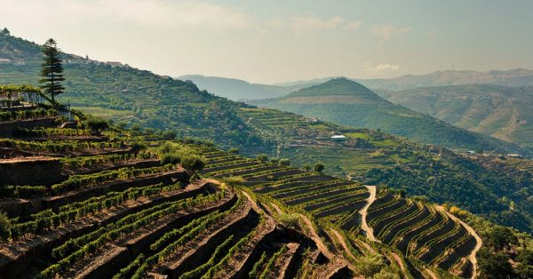 Portugal is for wine enthusiasts | Toronto Star