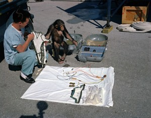 Chimpanzee Ham and technician go over equipment in preparation for launch.