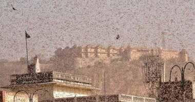 delhi-locust-advisory