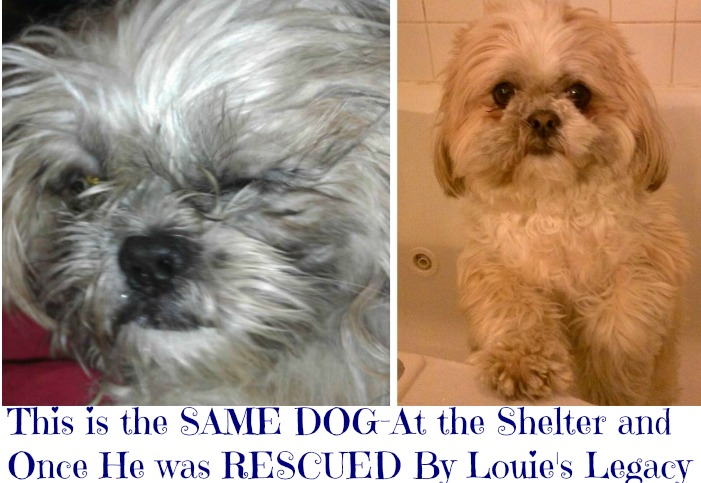 The Sunday Swoon: Support Louie's Legacy and Save Shelter Pups and Cats