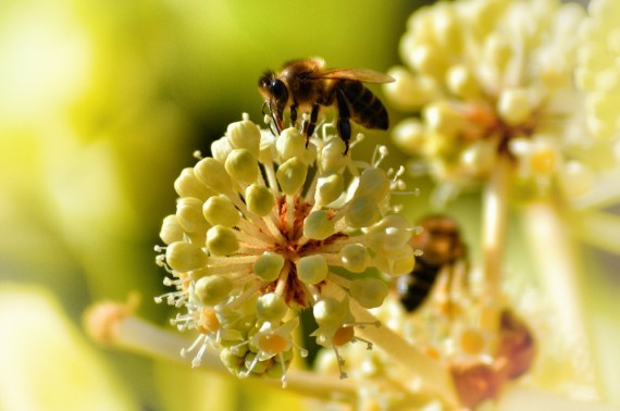 Honey is made through pollination and secretions of many fertile bees worshipping their queen, just what everywoman wants and symbolizes nature's procreative pinnacle
