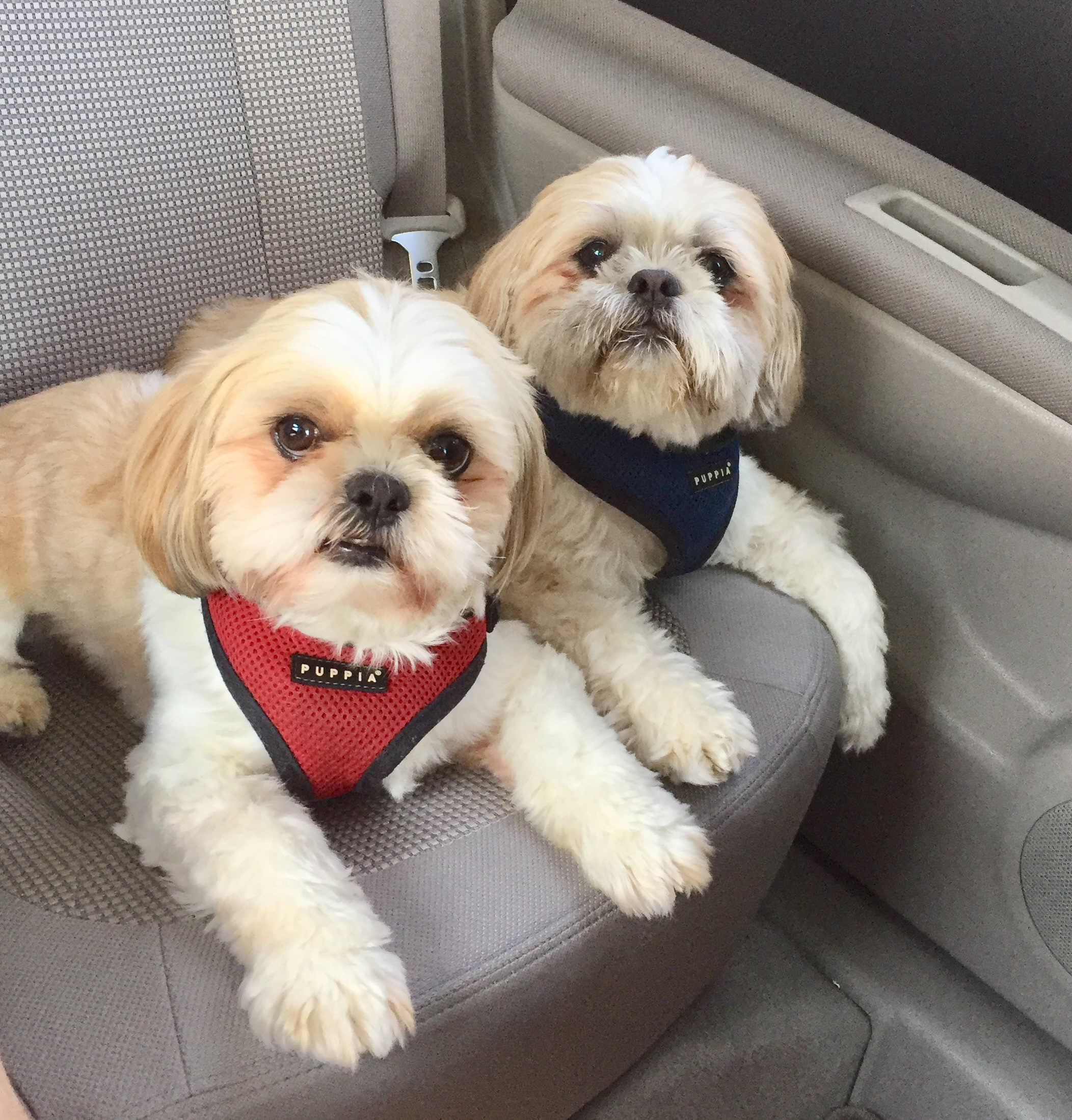 5 Ways to Show your Dogs You Love the