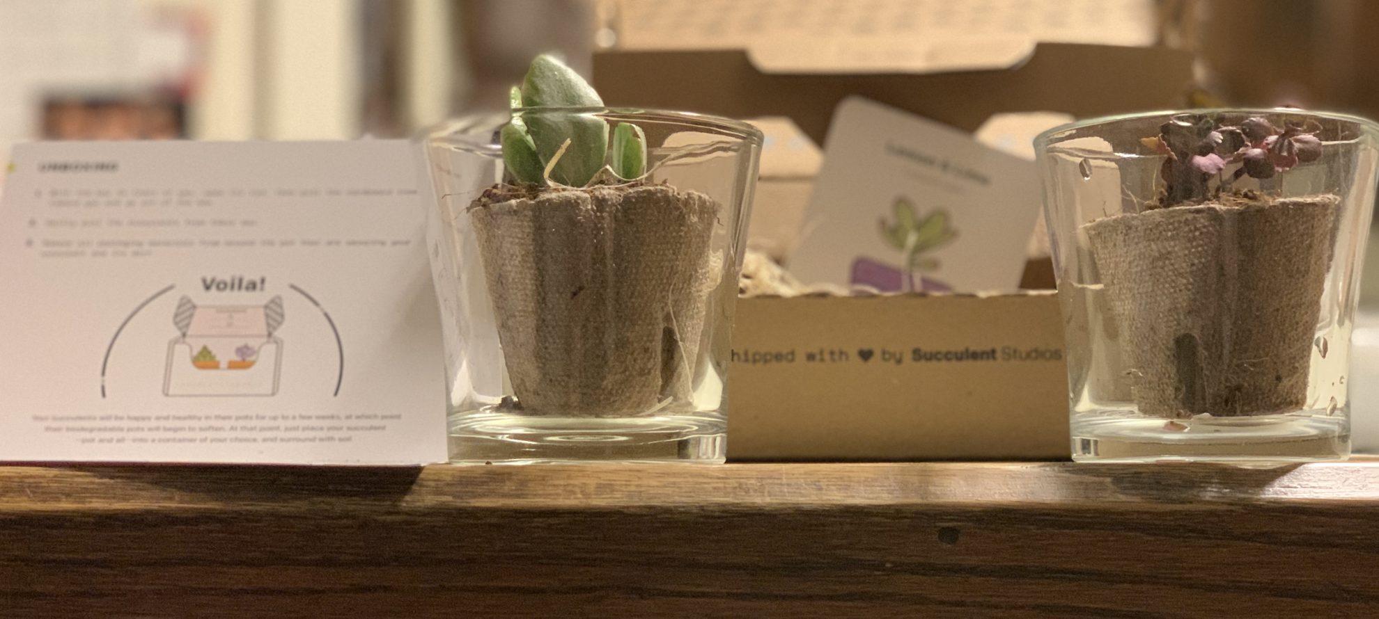 Get Crafty with this DIY Terrarium