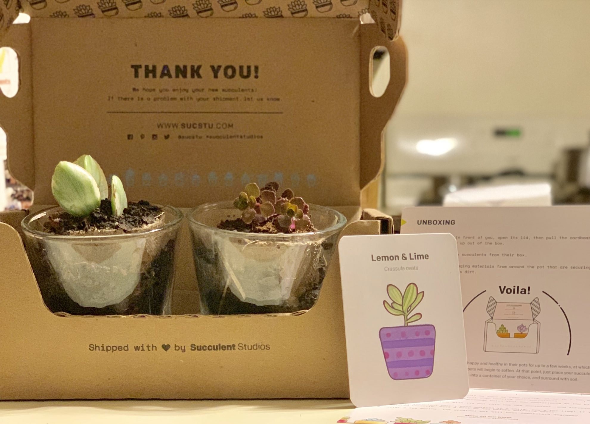One of my favorite ways to get succulents is delivered right to your door! FREE Shipping!