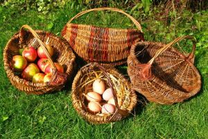 Willow Basket Workshop