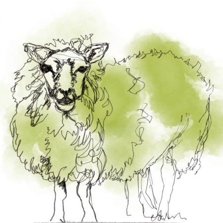 Emma Roberts Sheep Card for The Steel Rooms