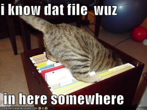 funny-pictures-cat-searches-for-a-file