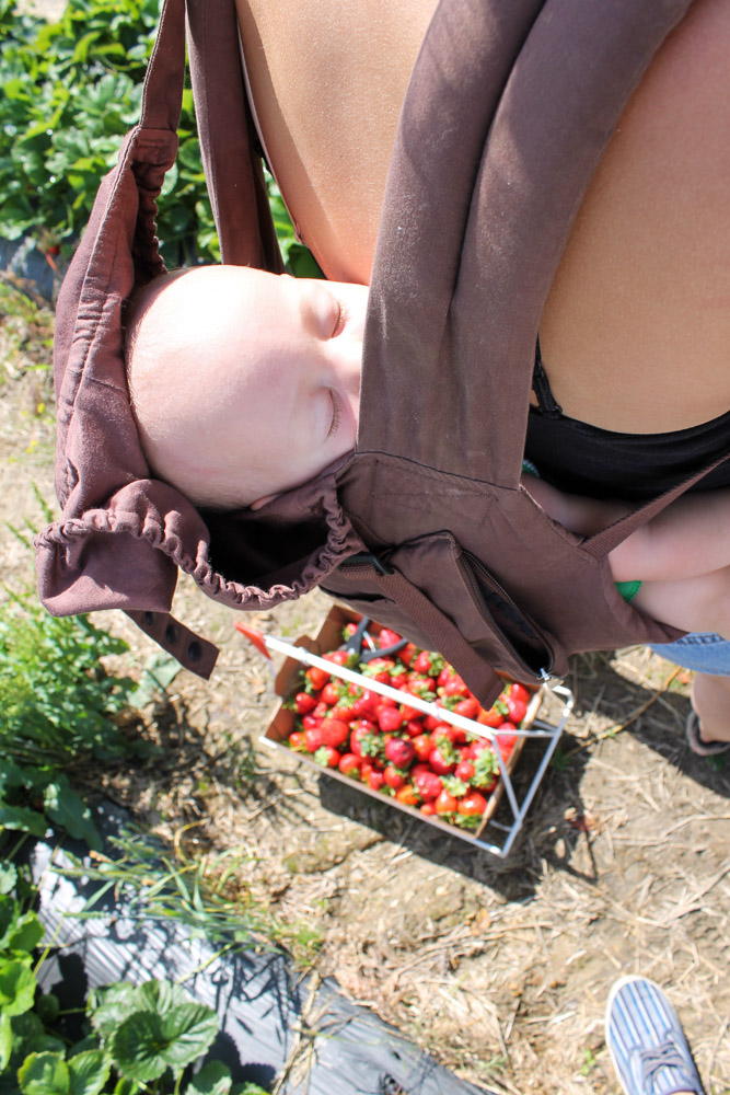 stewart_settlement_Strawberries_For_Days-27